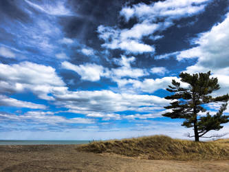 Beach View With Tree by ShaunAnarchy