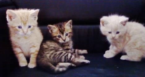 Kitty Stray Cat by Latin007