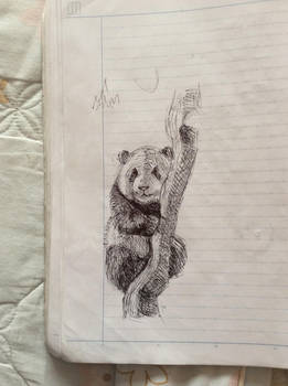 Panda from 2016