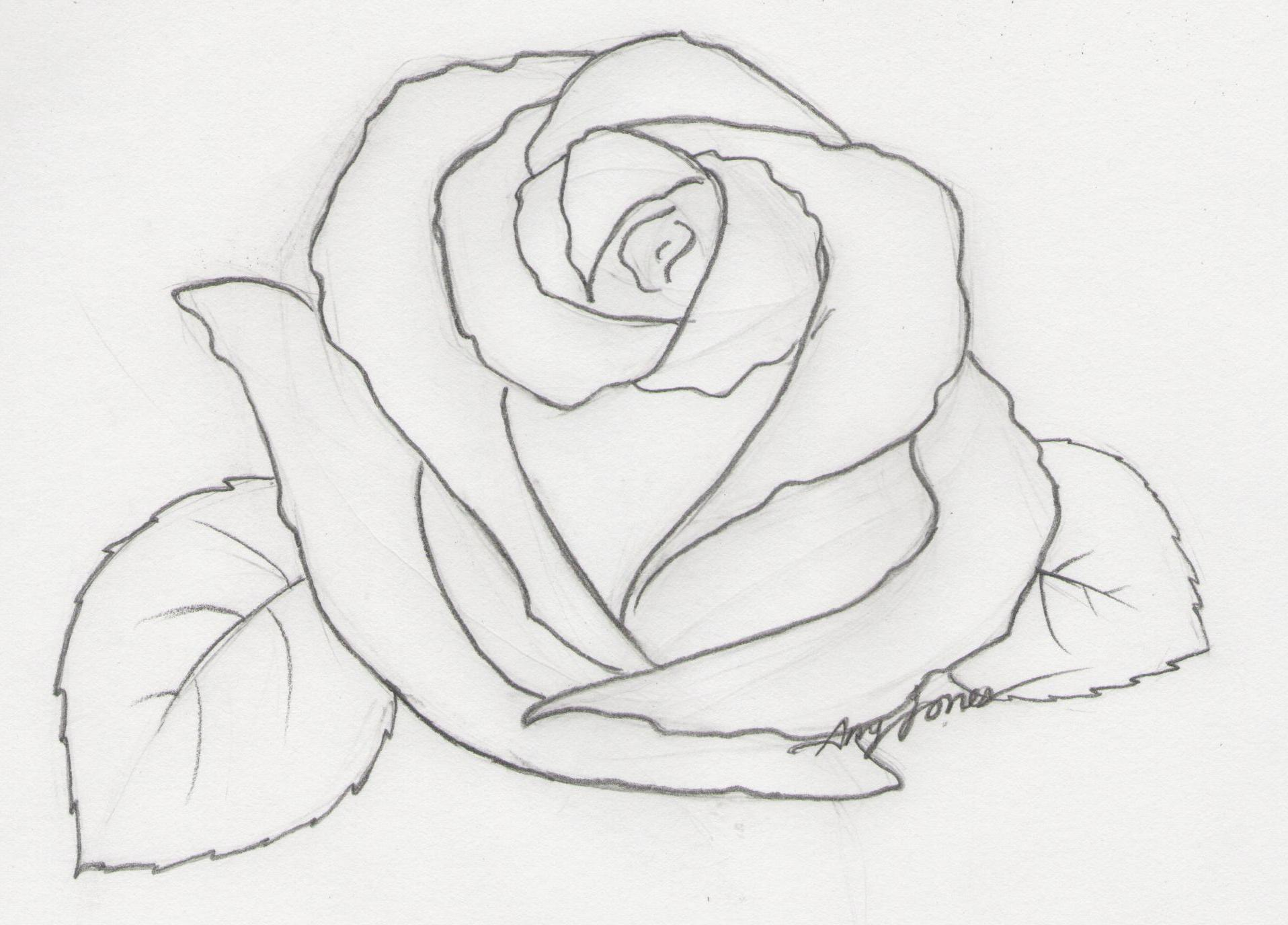 Rose: pencil by amourdefraise on deviantART