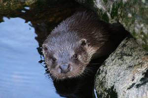 Otter again by MajorSamCarter