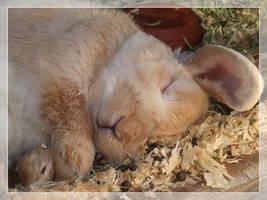 Nap time. by MajorSamCarter