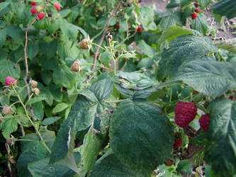In my garden by Gosia-P