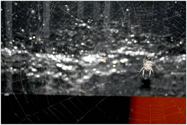THE Spider 2