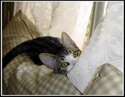 Peek a Boo Kitty by FaerieWings