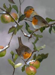 Robins by LeeshaHannigan