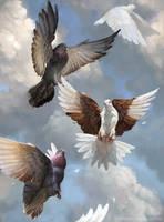 Pigeons in Flight by LeeshaHannigan