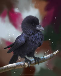 Pocket Raven by LeeshaHannigan