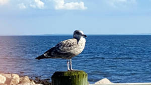 Gull of August by GUDRUN355