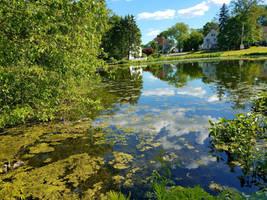 Pond in June by GUDRUN355