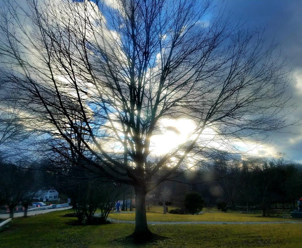 January Tree by GUDRUN355