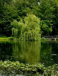 Willow Reflections by GUDRUN355