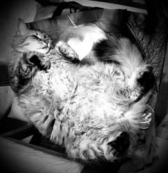 Fluffy Gunther