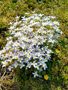 Flowers of Old Pond Lane