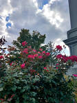 Roses and Sky