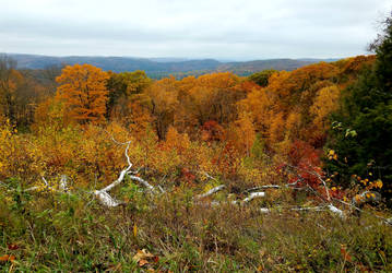 From the Mohawk Trail