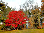 Autumn on Freedom Trail