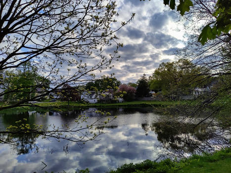 Where the pond meets the sky