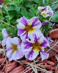 Dawn's Flowers