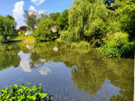 Old Willows and Summer Pond
