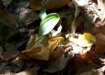 plant in light