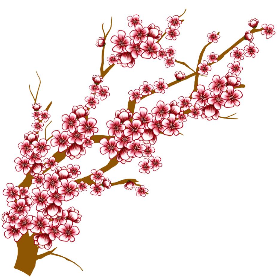cherry blossom branch - photo #32