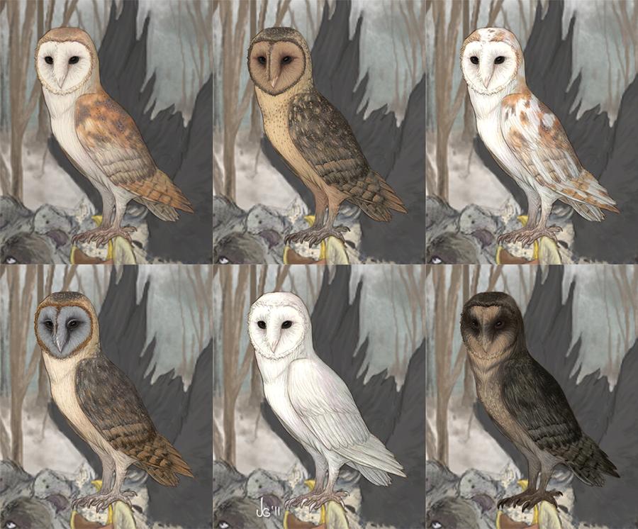 Alacrity Owls By Pleasedaspunch On Deviantart