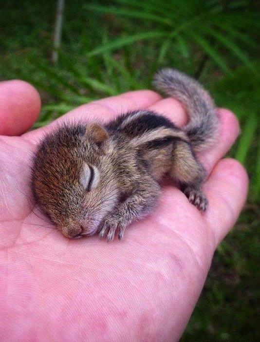Masik l'écureuil Baby_chipper_by_ftsarts-d6q8xyl