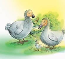 dodo by wandys