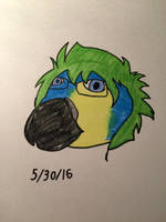 Erin the parrot by LovelyBunny-17