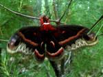 Moth or Monster?