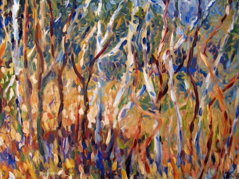 Grove with joung Birch Trees
