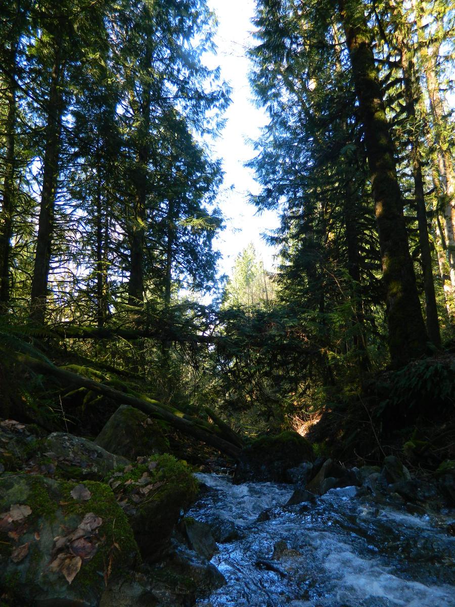 Fresh mountain water by Matthew-Fuller