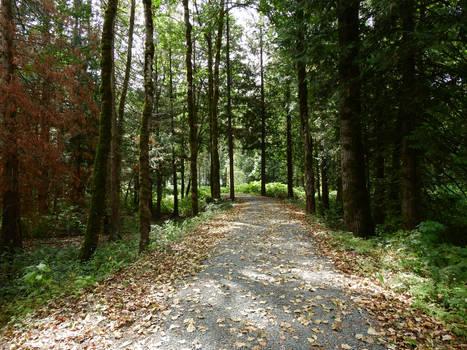 Vedder greenway trail~8/20/2019~9