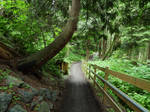 Vedder greenway~6/17/2020~3