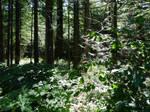 Trans Canada Trail/Cultus Lake~7/25/2020~1