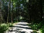 Biking the Vedder loop trail~6/28/2021~14