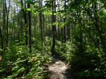 Chilliwack River trail~7/13/2021~6