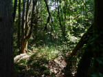 Chilliwack River trail~7/13/2021~7