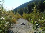 Biking the Vedder green~7/30/2021~6