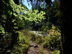 Biking to Tamihi Rapids~8/28/2021~6