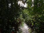 Coast to Canyon trail~10/1/2021~2