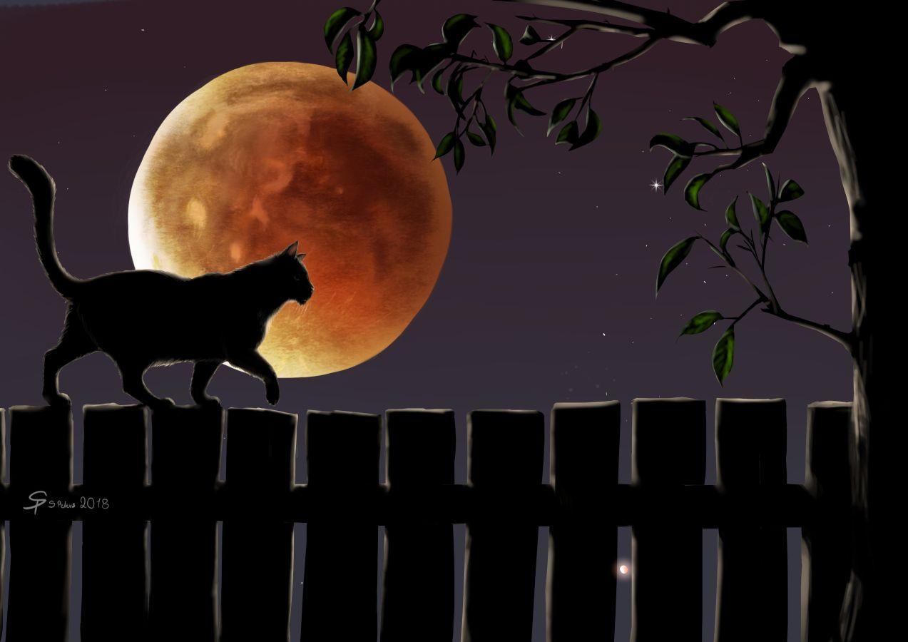 Blood Moon 2018 - Cat