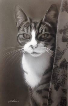Cat portrait commission