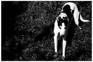 greyhound by lightsaber-master