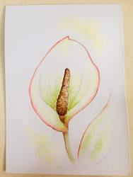 Watercolour flower 1 by Ariana-1997