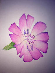 Watercolour flower 2 by Ariana-1997