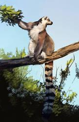 Ringtail Lemur by Prince-Petrichor