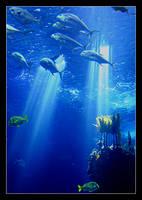 Underwater Dream II by nunovix