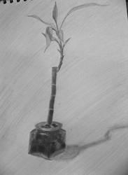 Bamboo by Keynant